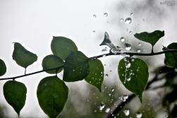 pluie. lapli. rain. lluvia.
